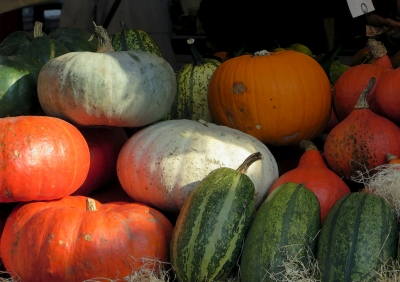 Pumpkins and Marrows