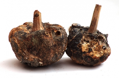 Dried and rotten squashes