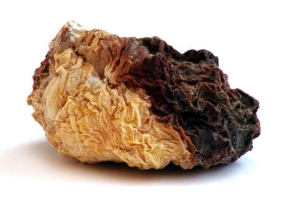 Shrivelled custard squash