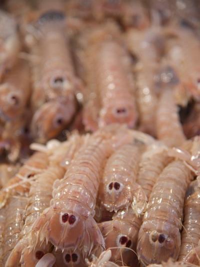 Market Creatures
