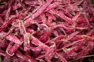 Cranberry Bean