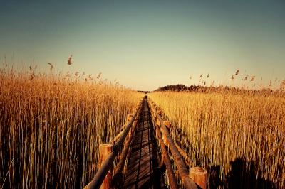 Footbridge of Kanieris Swamp