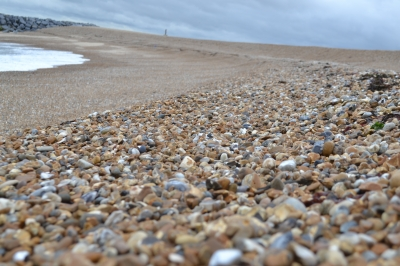 Selsey shingle