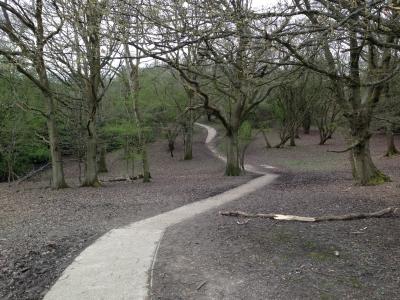 Walk in Woods